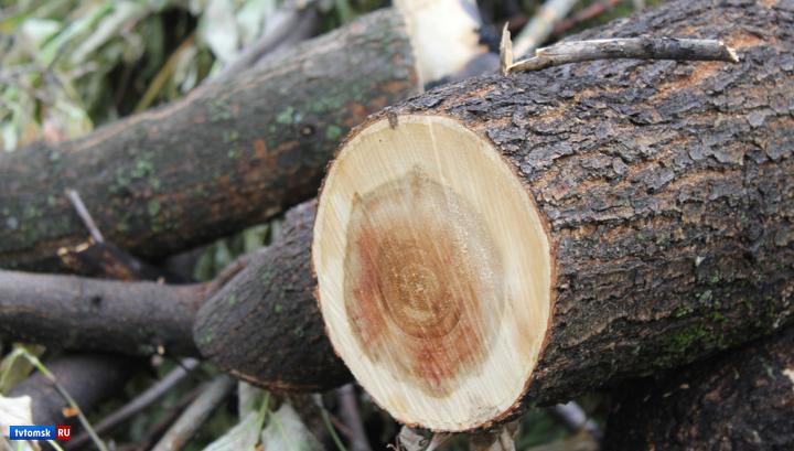 Контрабанду леса на сотни миллионов рублей пресекли в Томской области