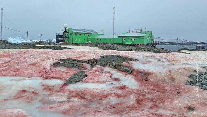 """""""Похоже на сало"""": снег возле украинской антарктической станции стал красным"""