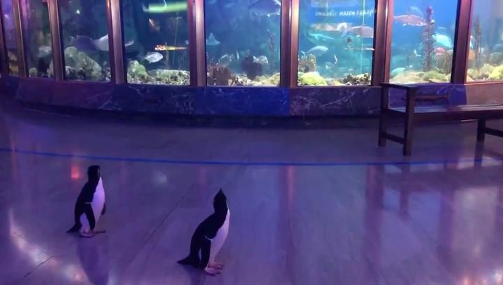 Пингвинов отправили на экскурсию по закрытому из-за коронавируса океанариуму