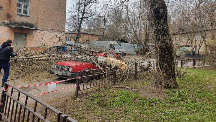 Ураганный ветер повалил почти 80 деревьев в Москве и области