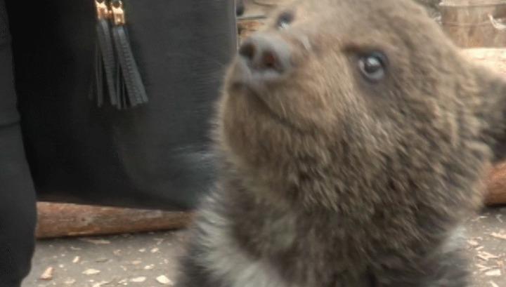 Двухмесячного медвежонка приютил житель Усть-Кута