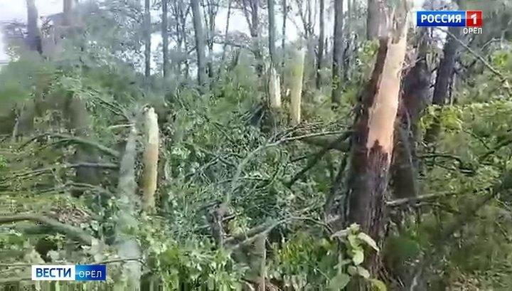 На Орловщине ураганный ветер раздел деревья