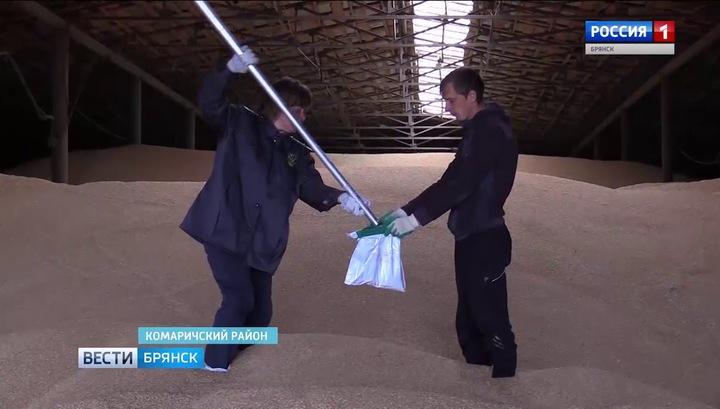 Россия в июне поставит за рубеж 550 тысяч тонн зерна