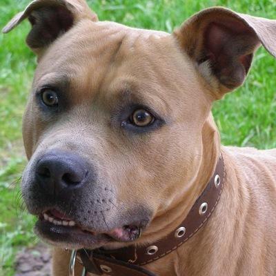 В Италии представлен законопроект о защите прав собак