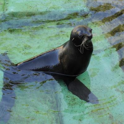 Морской котик задержал пьяного, проникшего в дельфинарий