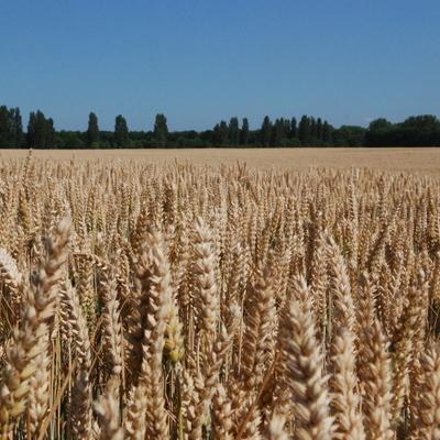 Урожай в этом году побьет предыдущие рекорды