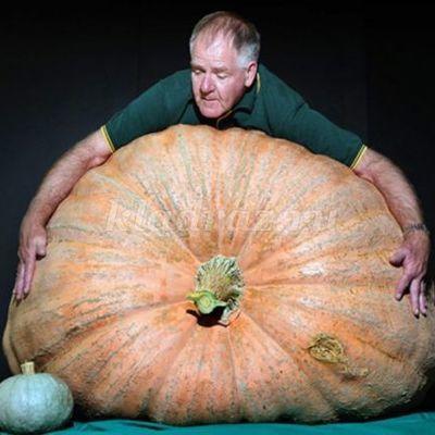Американский фермер вырастил самую тяжелую тыкву в истории общенационального конкурса в США