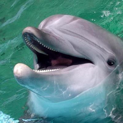 Свыше 150 дельфинов-гринд выбросились на берег в заливе Хэмелин на юго-западе Австралии