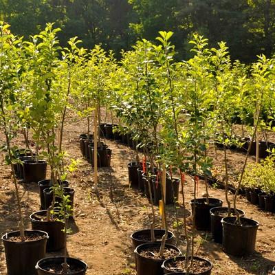 Растения, переживающие сильный стресс, способны «говорить»