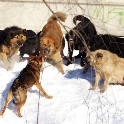Кабмин утвердил методические указания по обращению с безнадзорными животными
