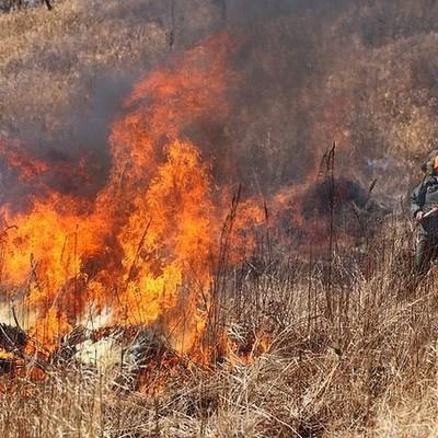 В Забайкалье в связи с пожарами могут ввести режим ЧС