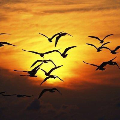Птицы могут вернуться в Россию из зимовки на неделю раньше