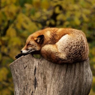 Дикие животные, как и люди, страдают от снижения иммунитета в старости
