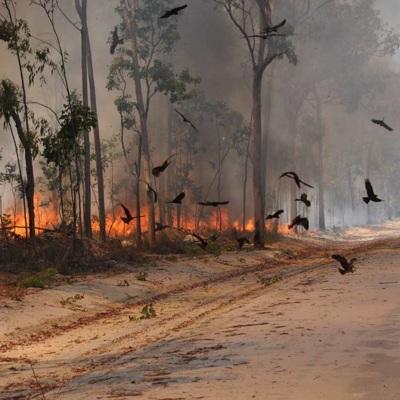 Пепел от масштабных лесных пожаров в Австралии может засорить местное водоснабжение
