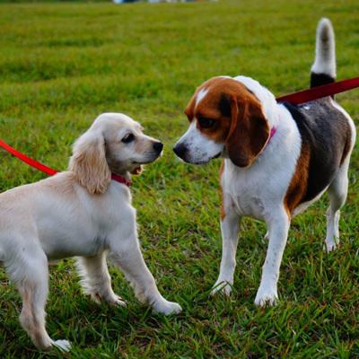 Коронавирус впервые обнаружили в Японии у двух собак