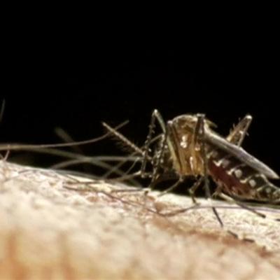 В Роспотребнадзоре призвали россияне не выезжать в Африку из-за малярии