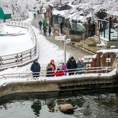 Московский зоопарк открывает закрытые из-за коронавируса павильоны