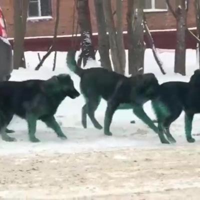 Ветеринары выяснили, почему собаки позеленели