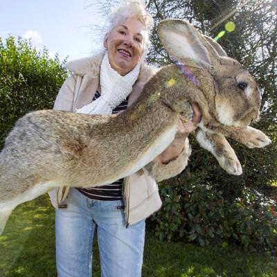 В Великобритании похитили самого большого кролика в мире по кличке Дариус