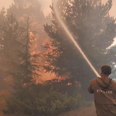 Более 205 тысяч гектаров леса горит в России