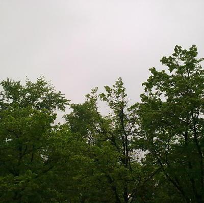 В Финляндии началась неделя объятий с деревьями