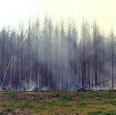 Пожары в Забайкалье причинили ущерб на 280 млн рублей
