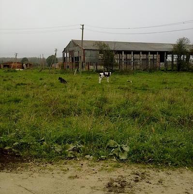 Дом из грязи и навоза обошелся британскому фермеру в 150 фунтов