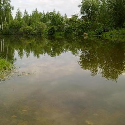 Биолог с мировым именем без вести пропала в лесу в Тверской области
