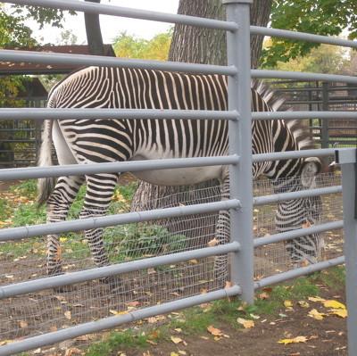 В некоторых швейцарских зоопарках хищникам начали скармливать домашних питомцев