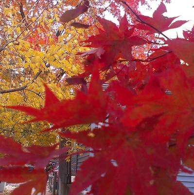 Синоптики рассказали, чем было вызвано аномальное потепление этой осенью