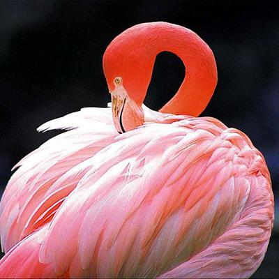В Московском зоопарке родились птенцы розовых и красных фламинго