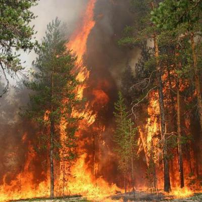 Площадь лесных пожаров, действующих в Якутии, превысила 355 тыс. га