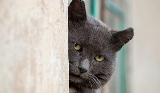 """Кадр из сериала """"Черная кошка"""""""