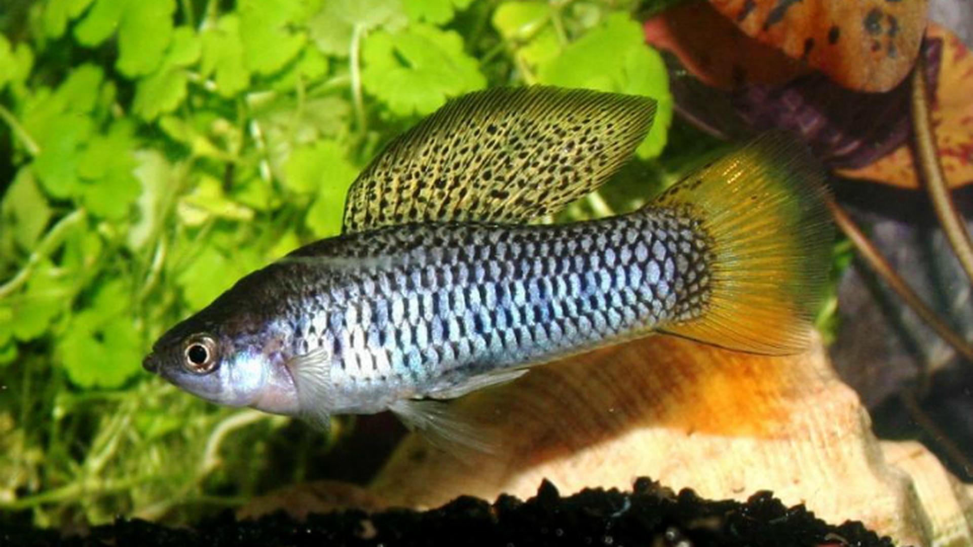 Рыба в сексуальных отношениях