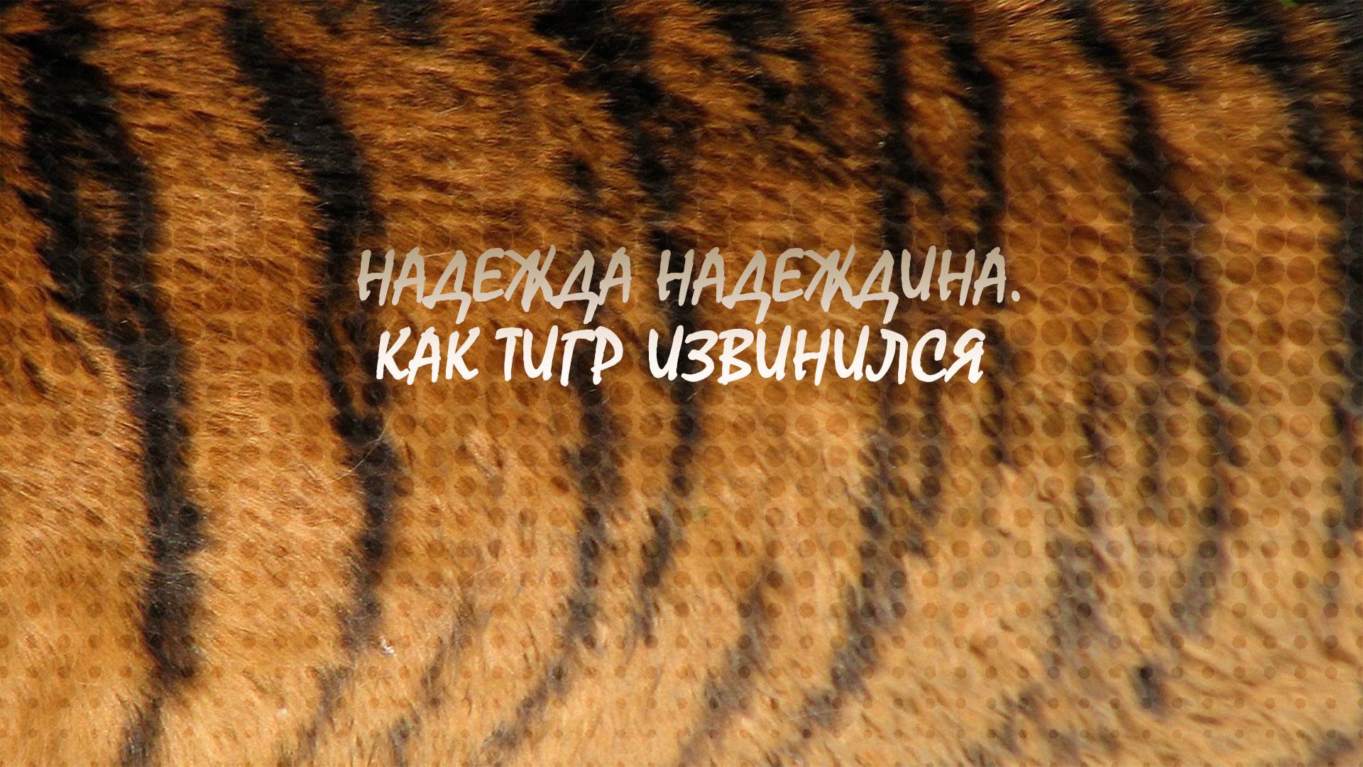 Надежда Надеждина. Как тигр извинился