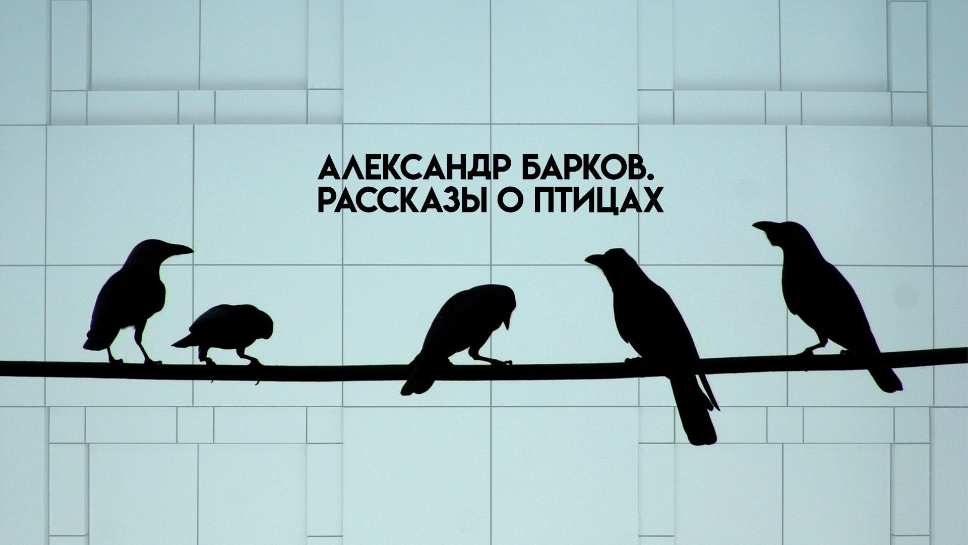 Александр Барков. Рассказы о птицах
