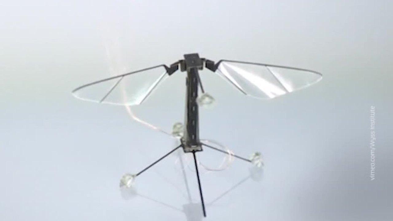 Вести.net: роботы-пчелы не могут без микровзрывов, а Toyota сделала свой сегвей