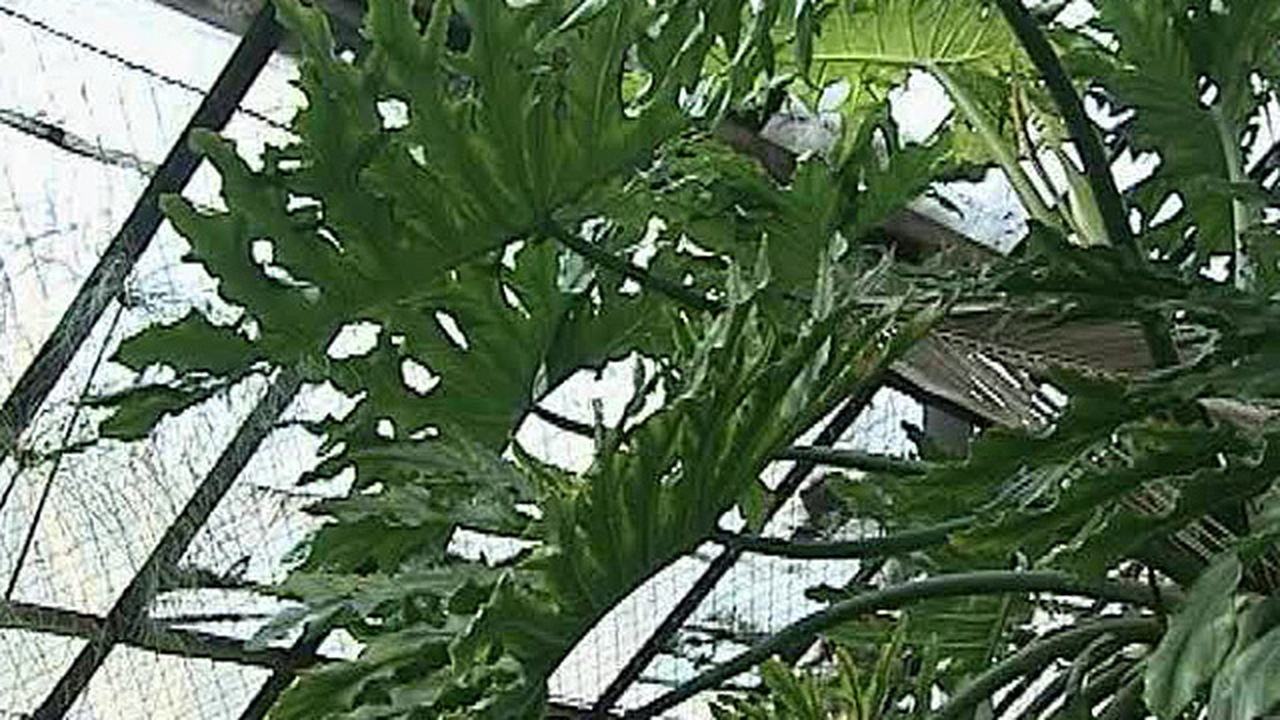 Учёным удалось записать на видеокамеру беседу растений