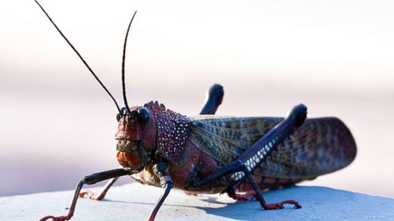 Представители ООН предложили голодающим есть насекомых