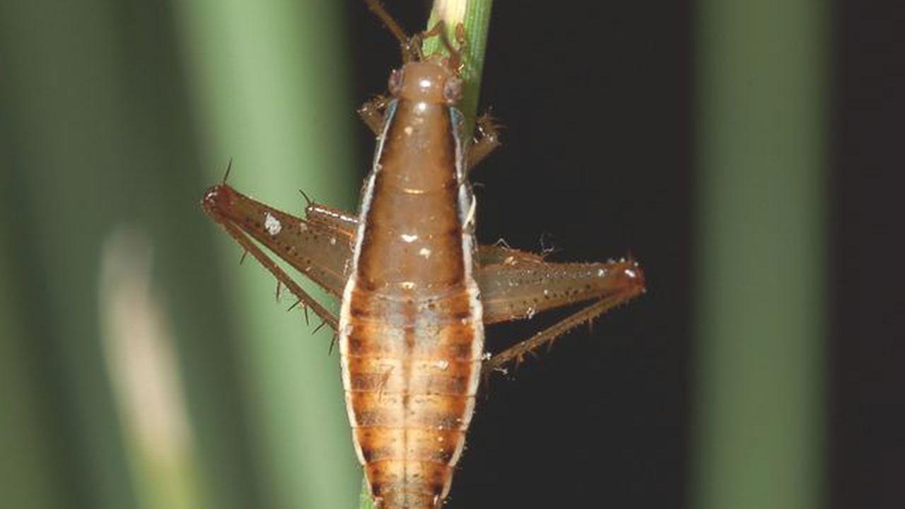 Еда будущего: насекомые и мясо из пробирки