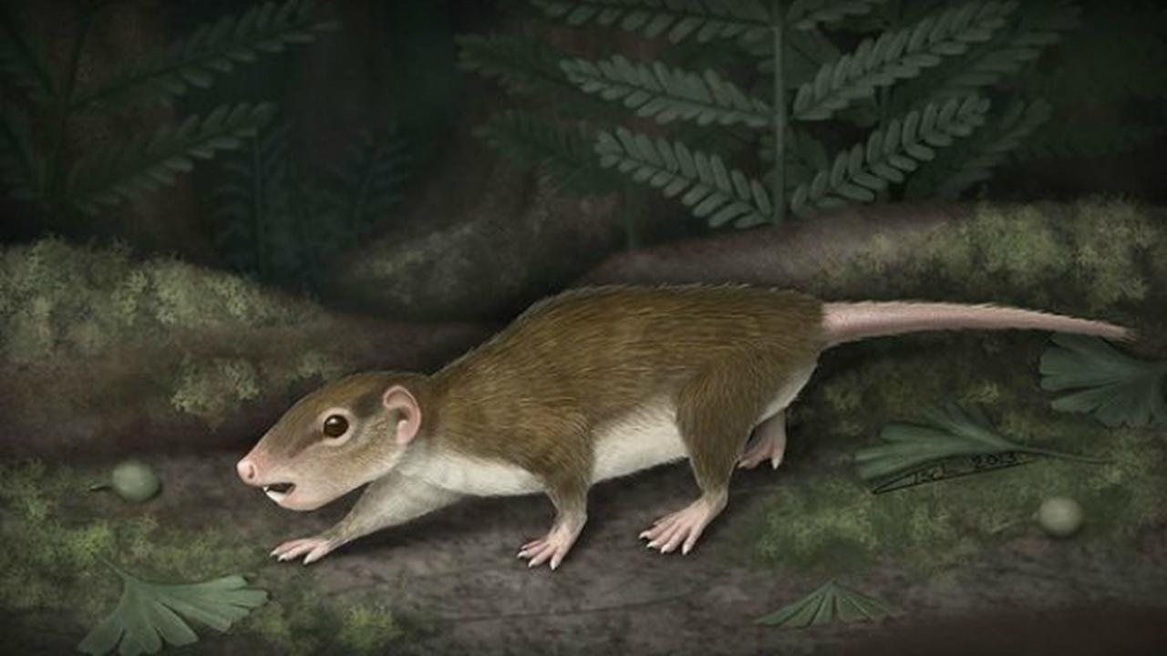 Палеонтологи раскрыли секреты самого успешного древнего млекопитающего