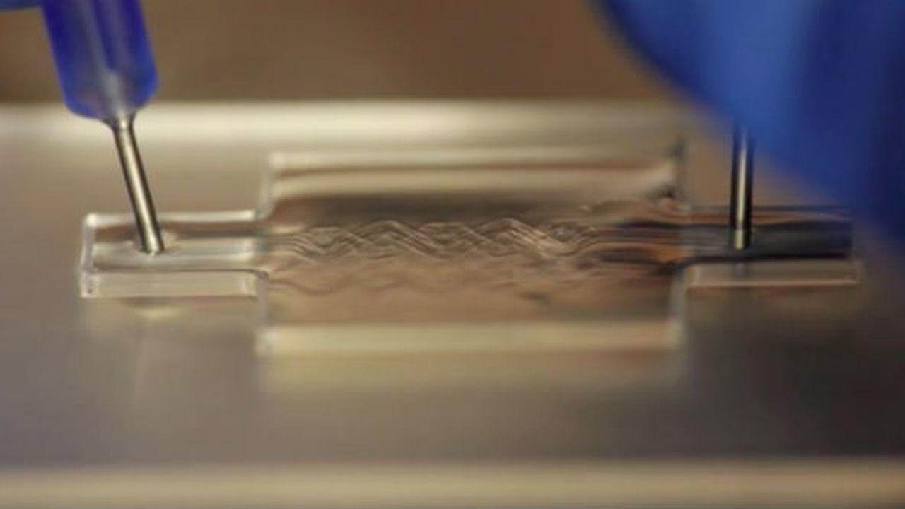 На 3D-принтере напечатали сложную ткань из трёх типов клеток и кровеносных сосудов