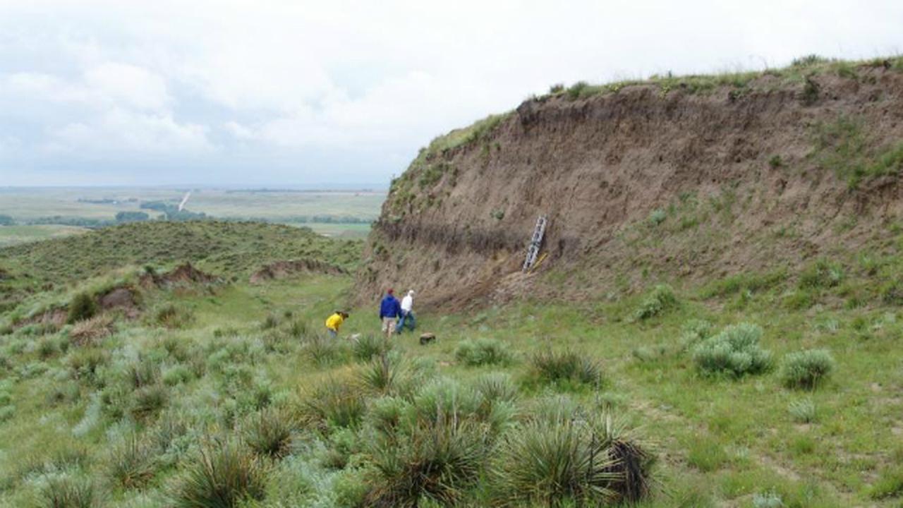 В древних почвах обнаружены большие запасы углерода