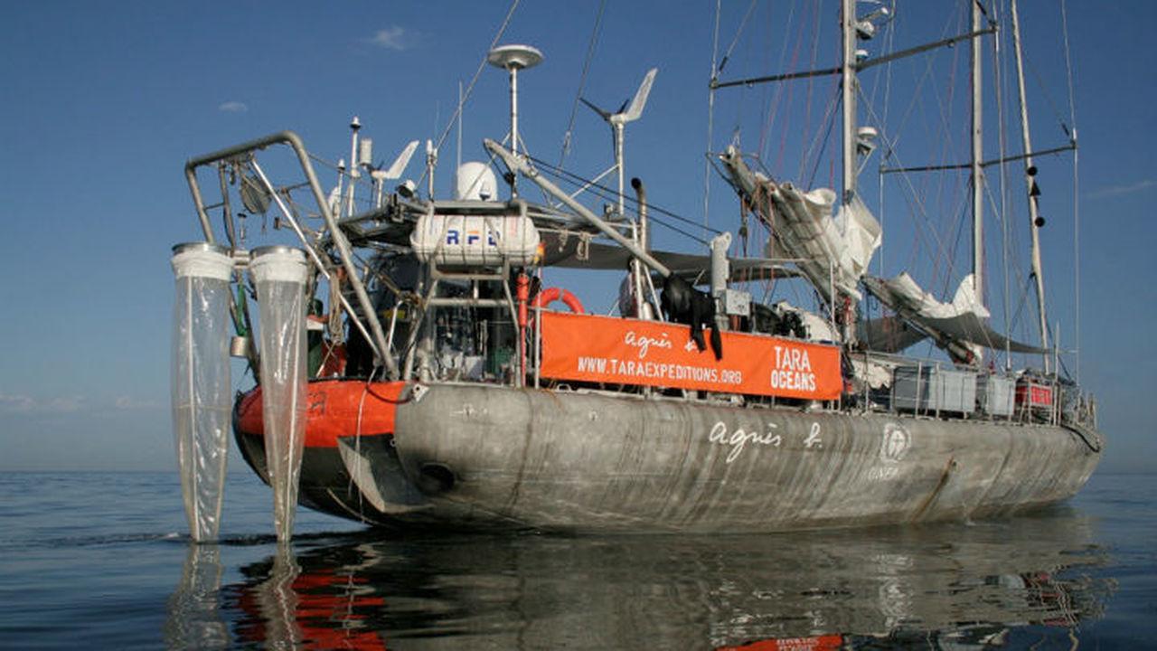 Морская экспедиция продемонстрировала удивительное разнообразие жизни в океане