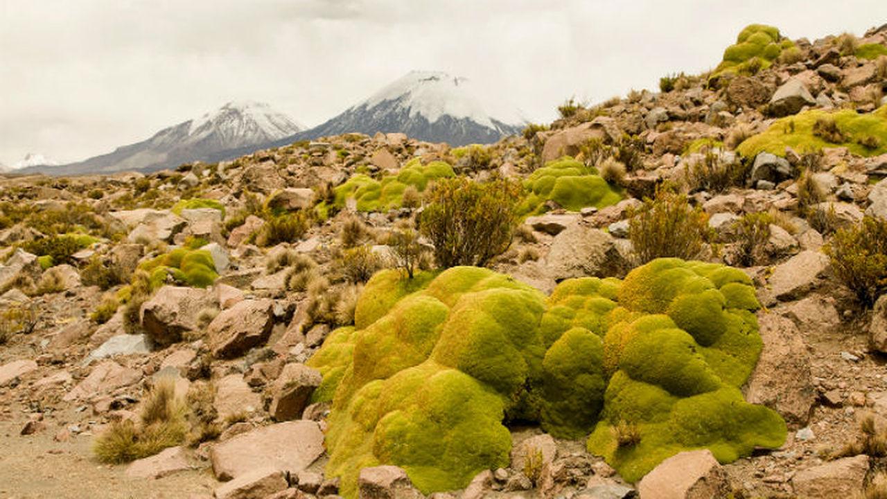 Куполообразные растения скрывают целые микроскопические миры