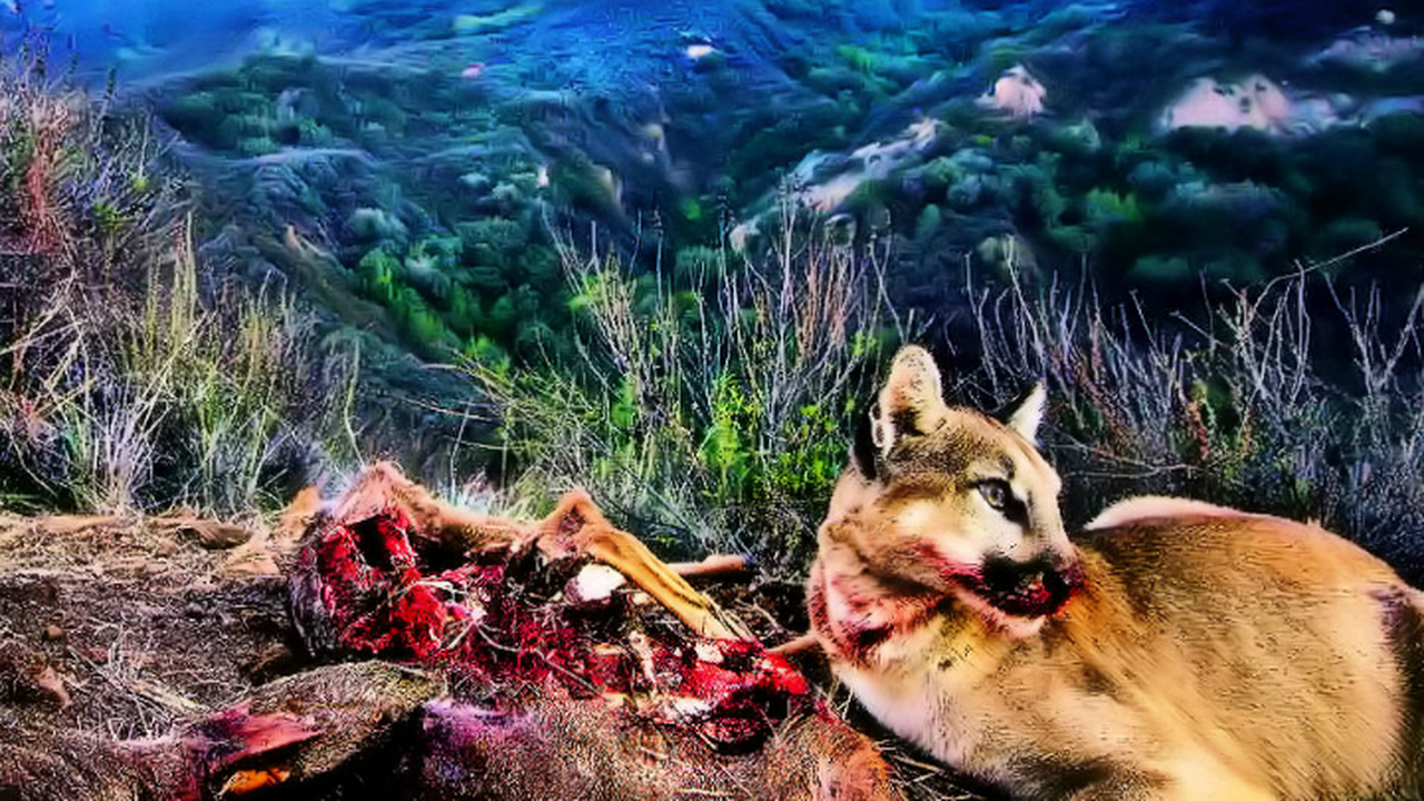 Количество хищников не всегда растёт с числом потенциальных жертв