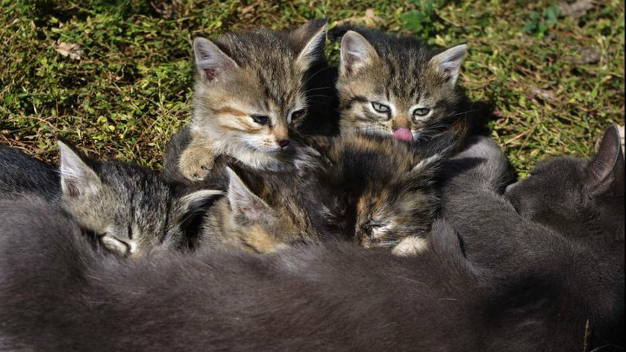 Разработана ДНК-вакцина для контроля рождаемости у животных