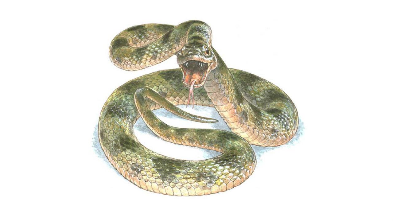 Палеонтологи восстановили окраску доисторической змеи