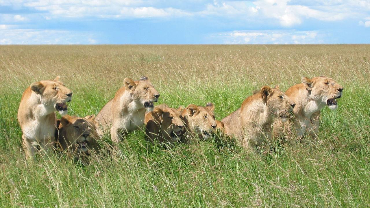 Социальное поведение делает животных умнее