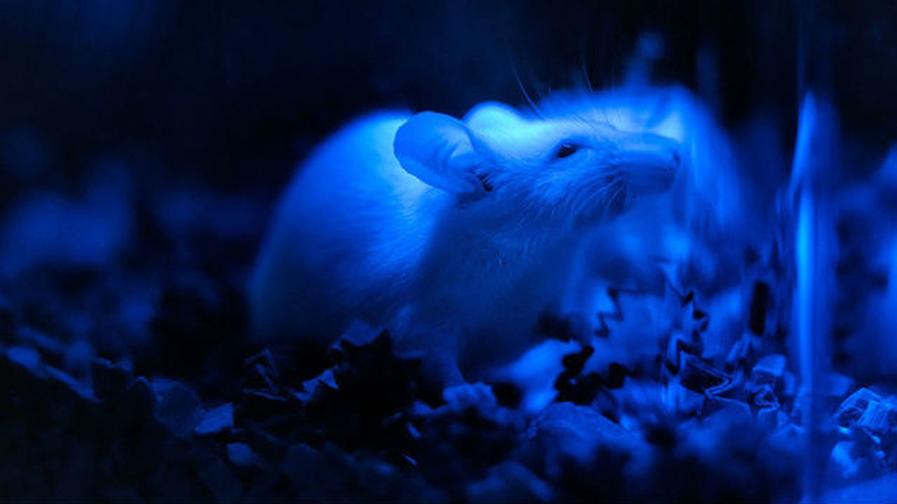Контроль генов и нейронов при помощи света: учёные готовы к клиническим исследованиям